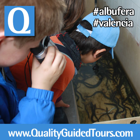 07 Albufera Valencia Natural Park Quality Guided Tours (6)