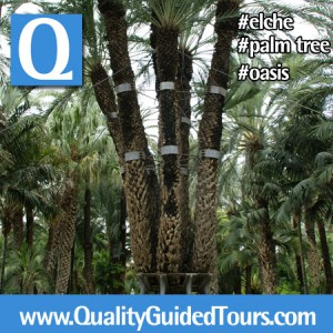 "Imperial palm tree at priest garden, Elche, Elche ""Palm tree groove"""